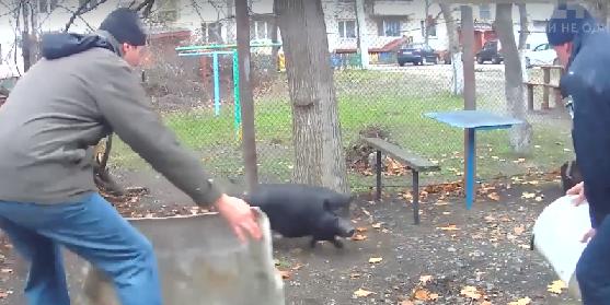Животное задержали возле школы