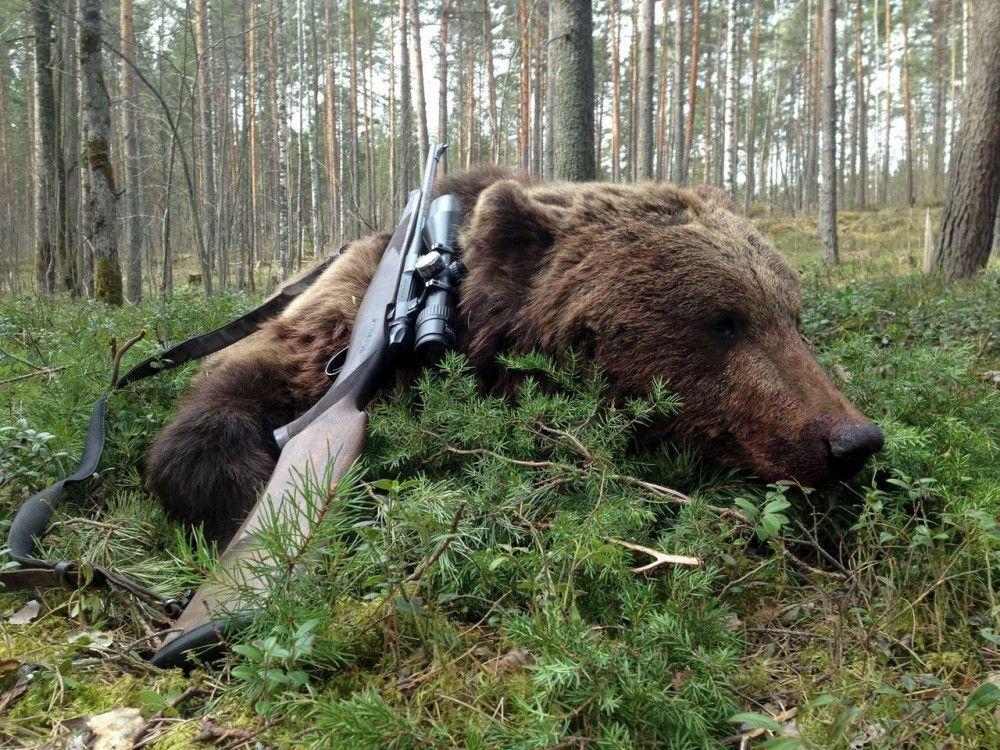 Медведь и оружие