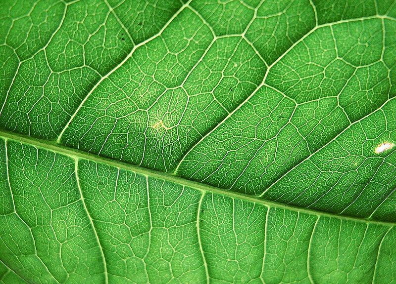 Вариация фотосинтеза поможет спасти человечество от голода