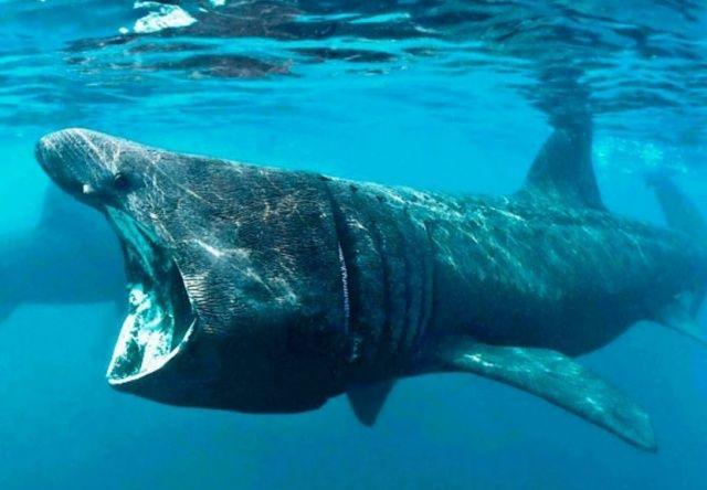 Гренландская акула стала самым долгоживущим позвоночным