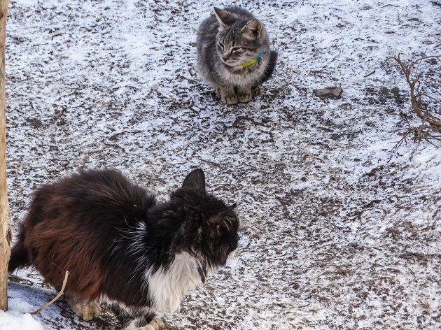 Усато-полосатые солдаты. В АТО бойцы показали опекаемых ими котов и кошек: фото
