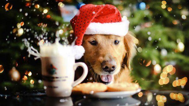 Желтая Земляная Собака - ответственное и дружелюбное животное.