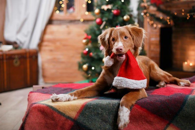 Собака олицетворяет мир и добро