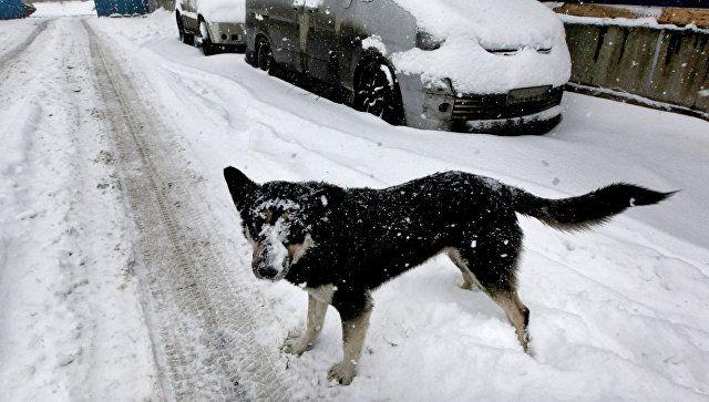 Собака, припорошенная снегом