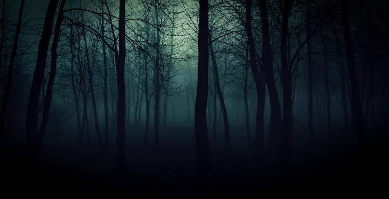 Тело убитого человека нашли в лесу.