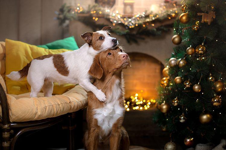 Собаки и елка