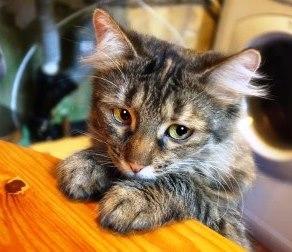 Злоумышленник не признал, что жестоко поступил с котом