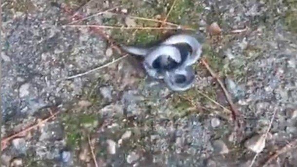 В Китае в лесу жители встретили двухголовую змею. Фото: скрин Youtube