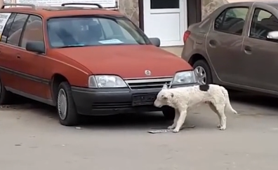 В Ялте сняли на видео пса-