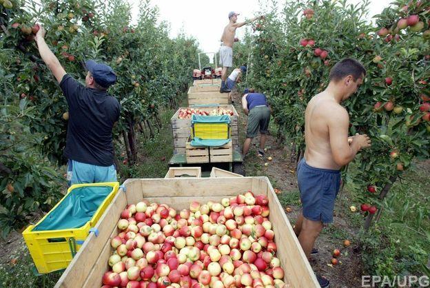 В Польше заявили, что украинские трудовые мигранты стали
