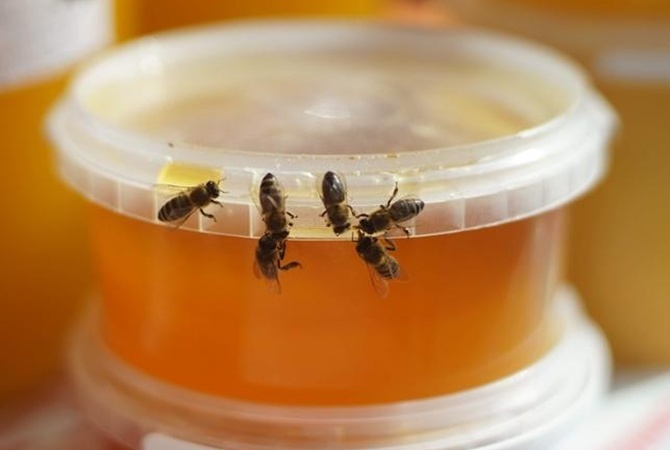 Украинские пчелы
