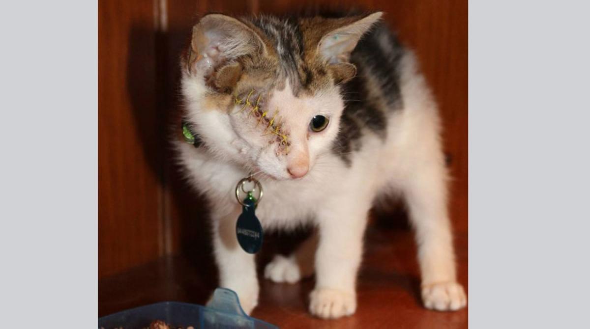 В Австралии нашли удивительного котенка