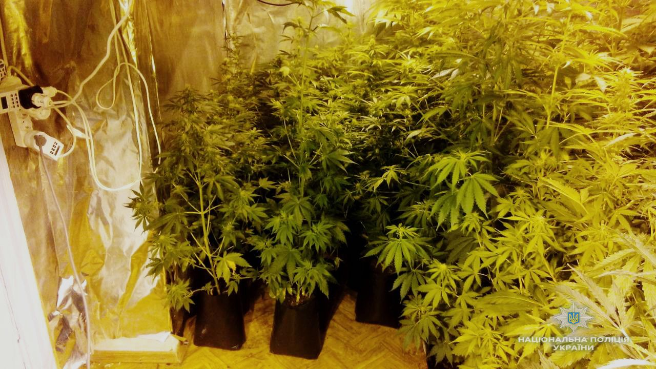 марихуану выписывают при