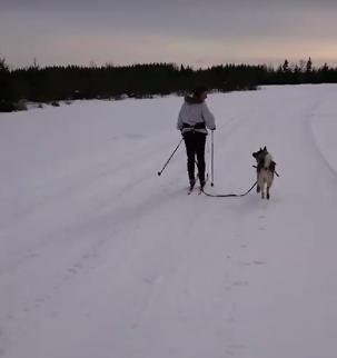 Видеоролик с псом-лентяем в соцсети собрал тысячи лайков