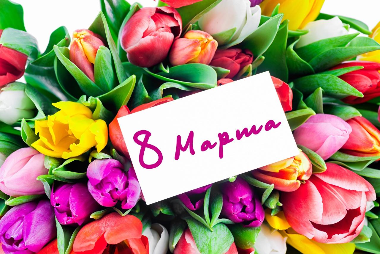 8 Марта_тюльпаны_открытка