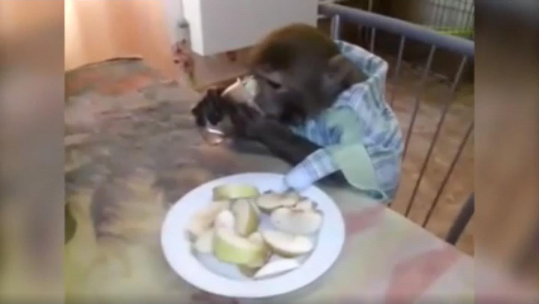 Автор ролика напоил животное алкоголем