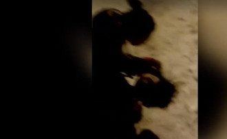 / Скриншот из видео
