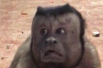 На видео животное растерянно смотрит в камеру