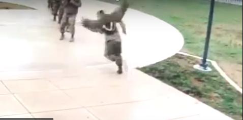 Гусь был сердит и напал на солдата