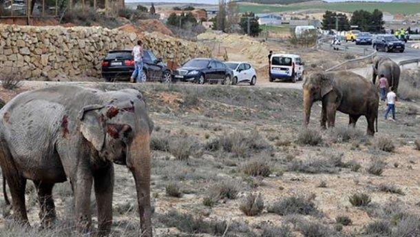 Дикие слоны ворвались в деревенский дом.