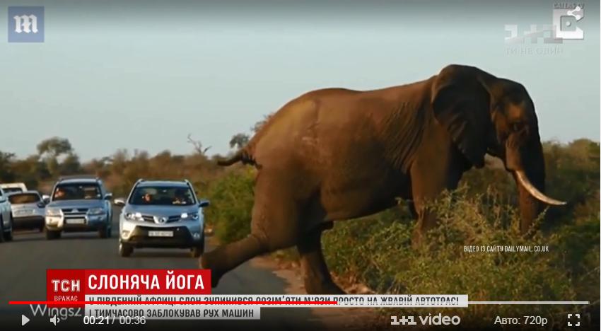 Слон продемонстрировал завидную физподготовку