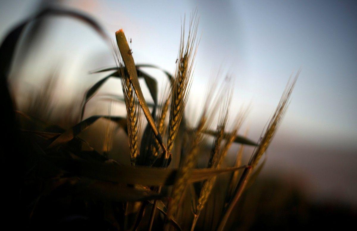 В Крыму заявили о засухе и гибели урожая