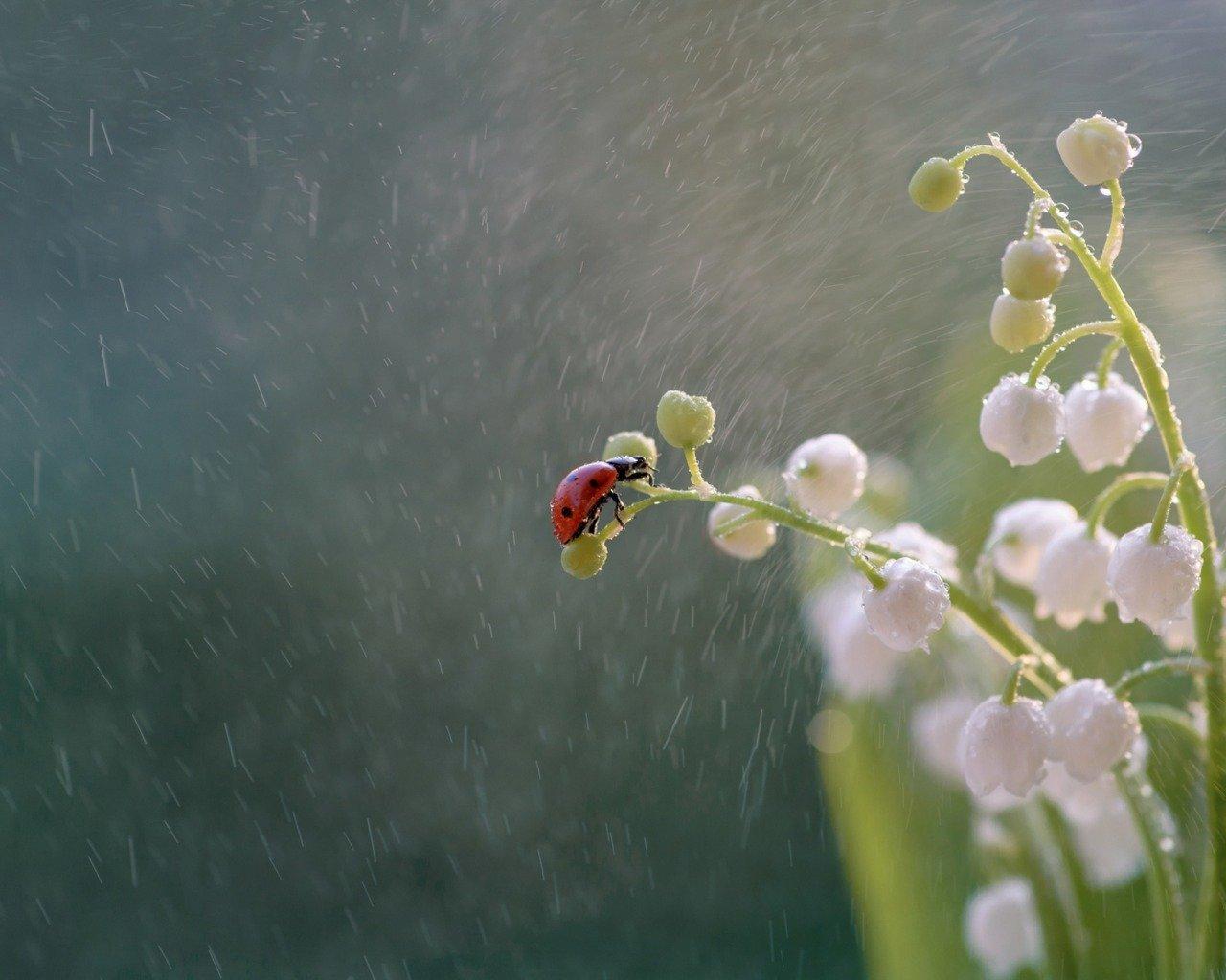 14 июня в Украине ожидаются дожди и жара.