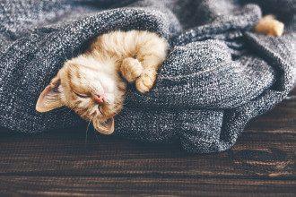Что надо есть днем для здорового крепкого сна ночью.