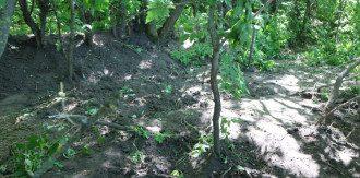 В лесополосе было найдено тело женщины, которое пролежало там 15 лет