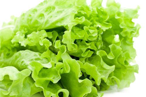 Салат-латук стал причиной массового отравления людей