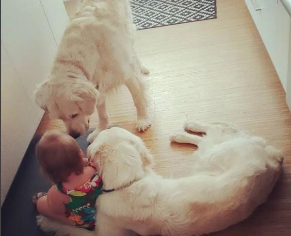 Родители Хлои завели аккаунт в Instagram, где демонстрируют любовь собак к малышке