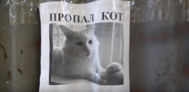 Пропавший кот превратился в магического