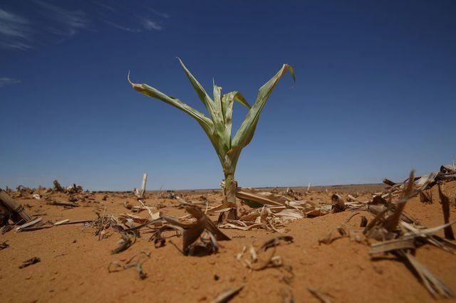 Крым этим летом страдает от сильной засухи
