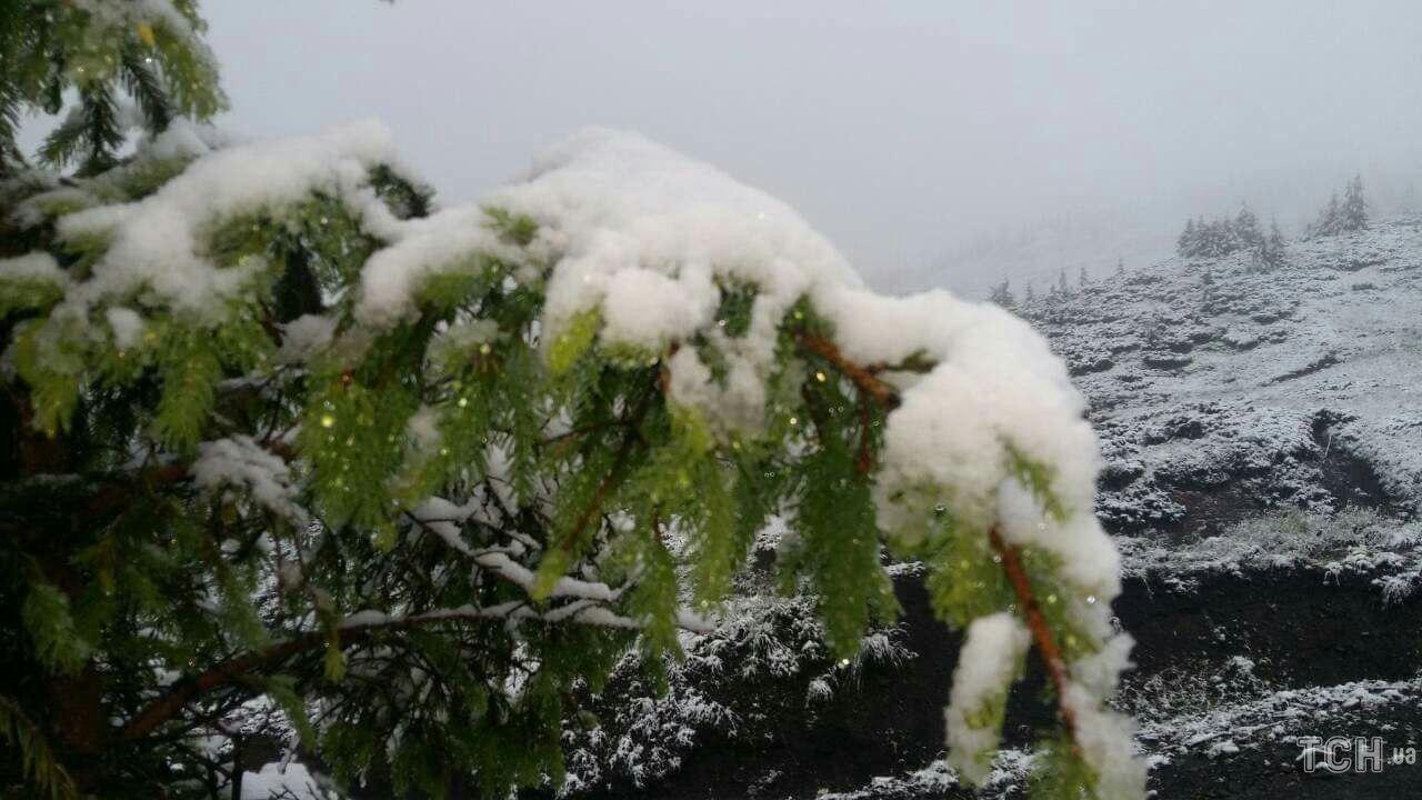 На Закарпатье снег покрыл толстым слоем деревья, кусты и землю
