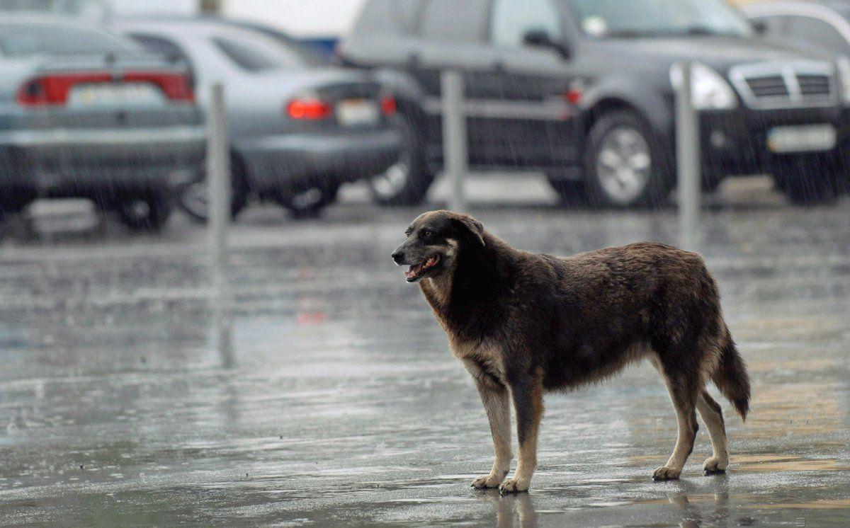 Большинству областей Украины из-за циклона грозит непогода