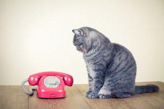 В Украине выросли тарифы на стационарный телефон.