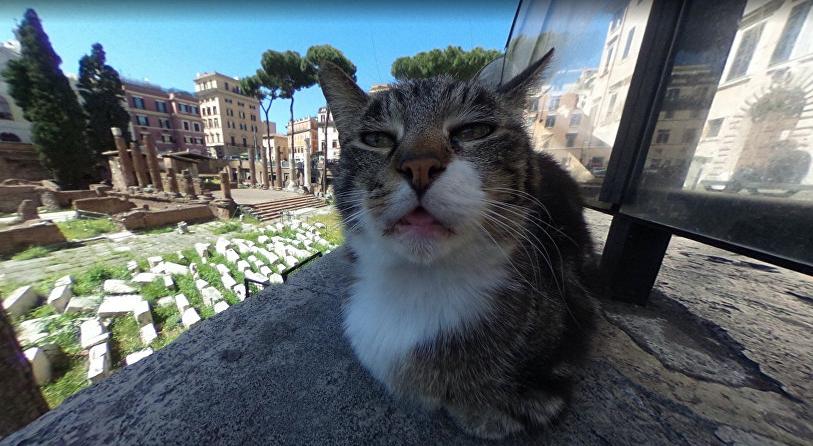 Кот влез в панораму Google Maps.