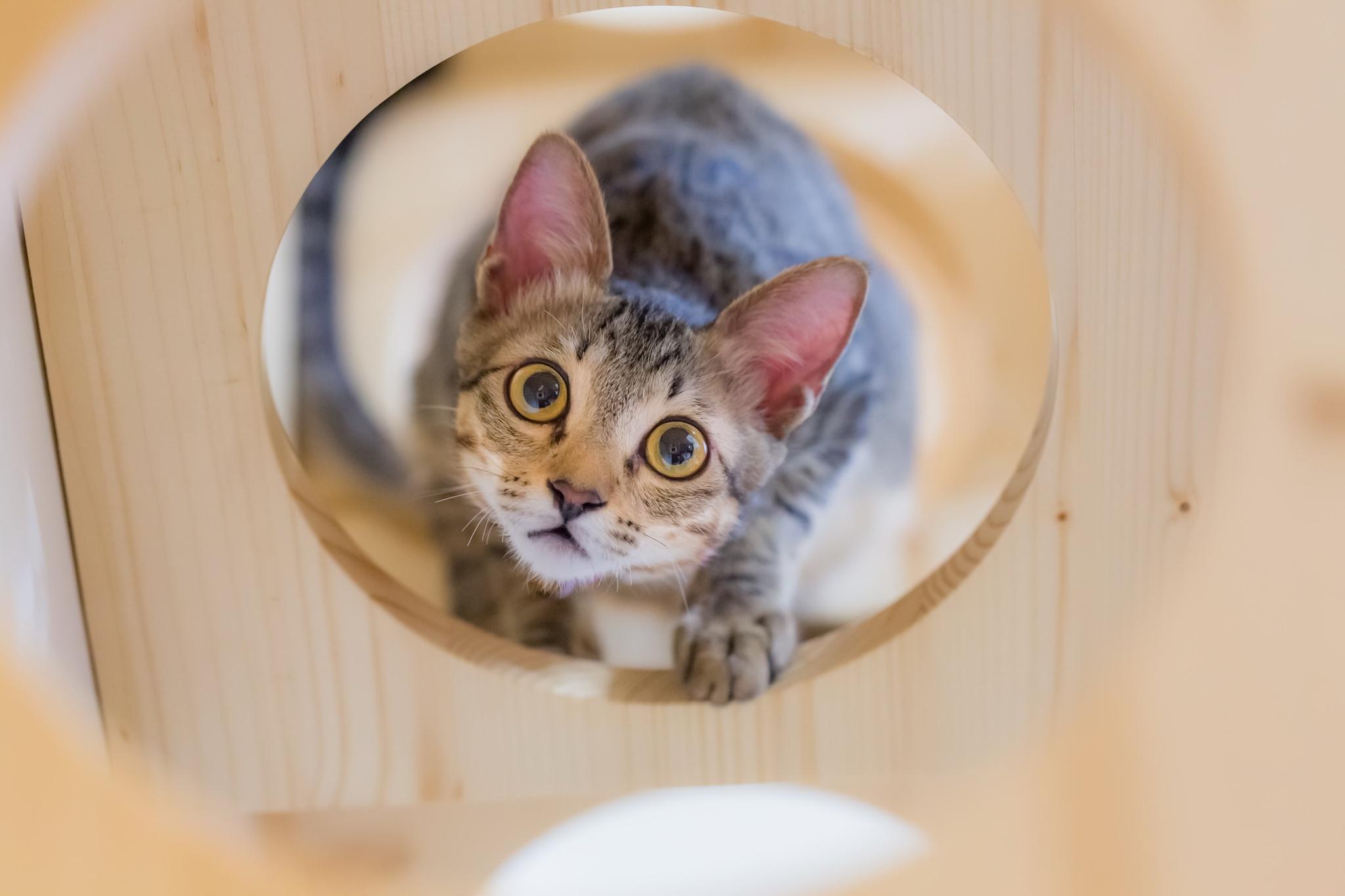 Каким должно быть правильное питание для кошек.