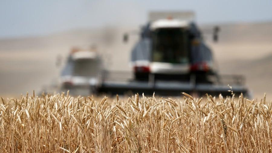 Комбайны убирают пшеницу на поле около Круглолесского села в Ставропольском крае 26 июня 2018 года.