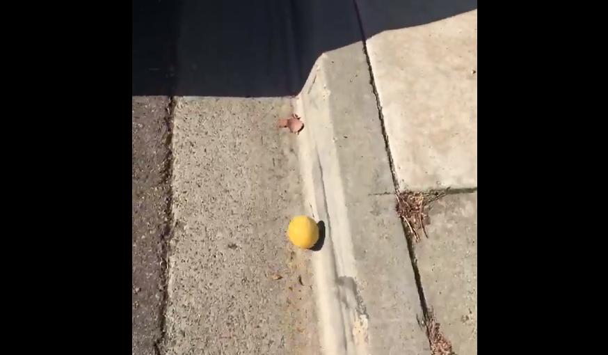 Удивительно, что лимону еще не завели собственный аккаунт