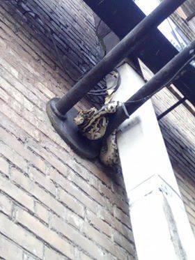 В Киеве питон открыл дверь жилья, выполз и оказался на улице, утверждают его хозяева