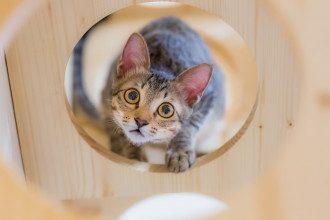 Почему кошки лезут в коробки: два ответа