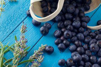 Польза ягод — Черника, шелковица, малина, клубника и ежевика — самые полезные летние ягоды