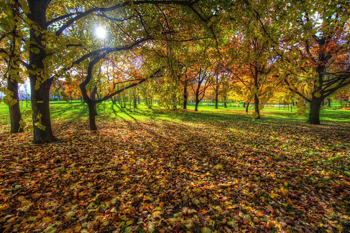 погода_осень_парк_листья_листва_деревья