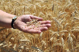 Украина заигрывает с мировым рынком зерновых