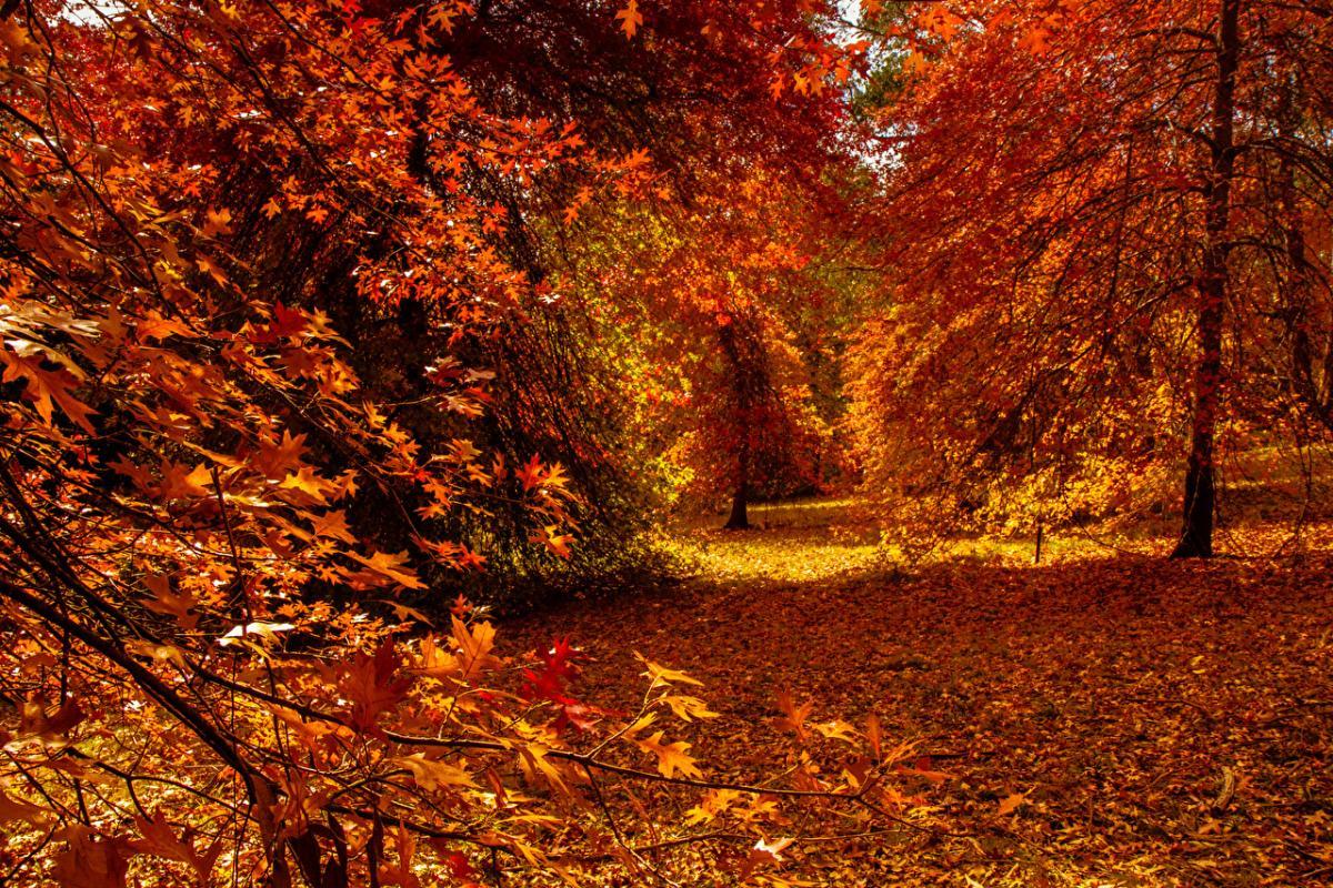 осень_природа_листья_лес