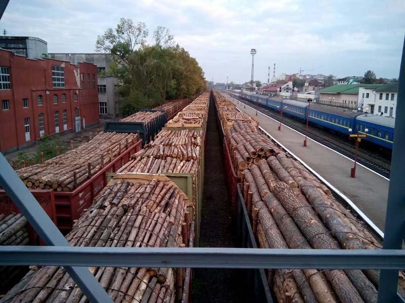 Украинский лес снова пойдет на экспорт в Европу