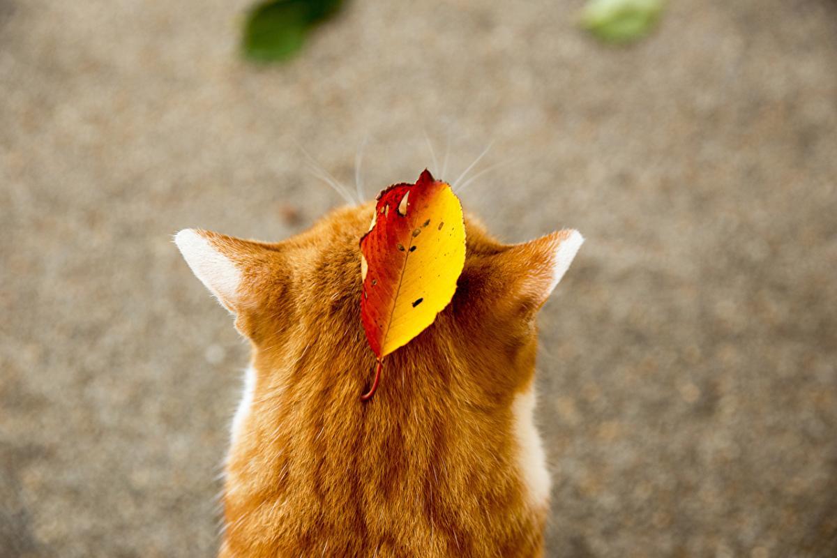 природа_погода_Осень_кот