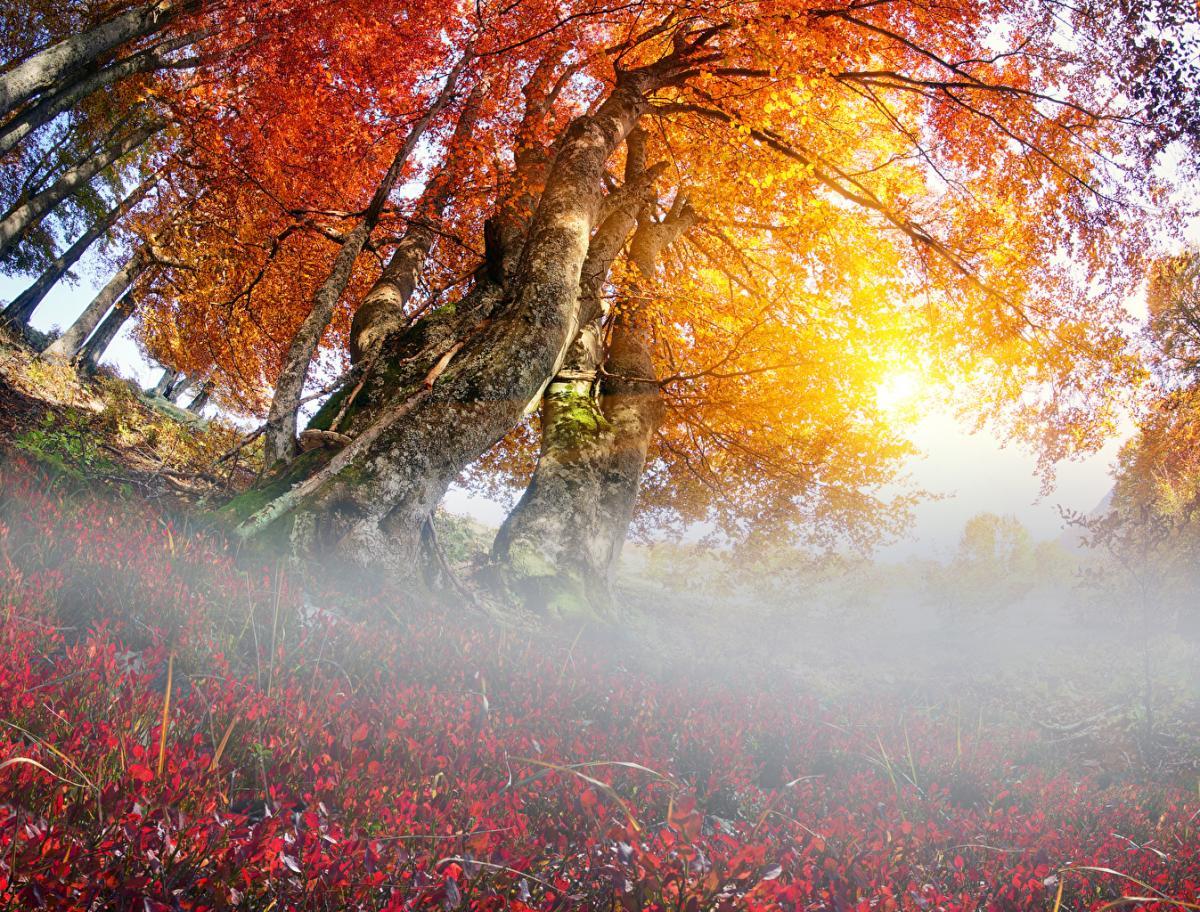 погода_осень_туман_деревья