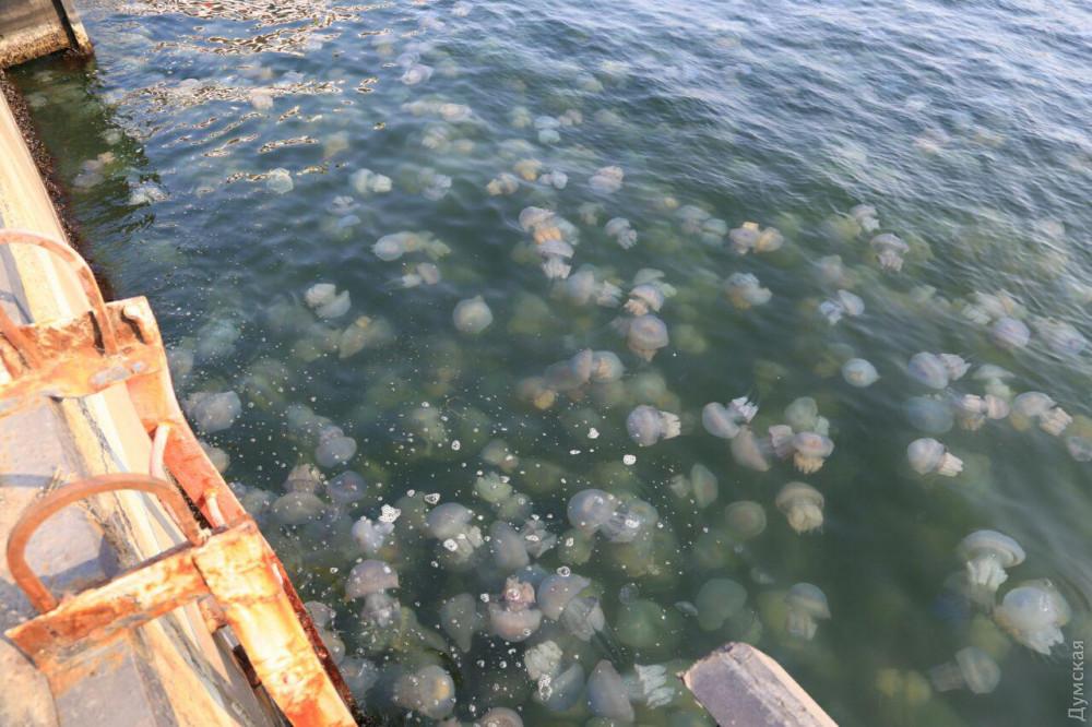Медузы в Одессе